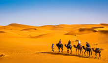 Camel Caravan Going Through The Sand Dunes In Beautiful Sahara Desert. Amazing View Nature Of Africa. Artistic Picture. Beauty World.