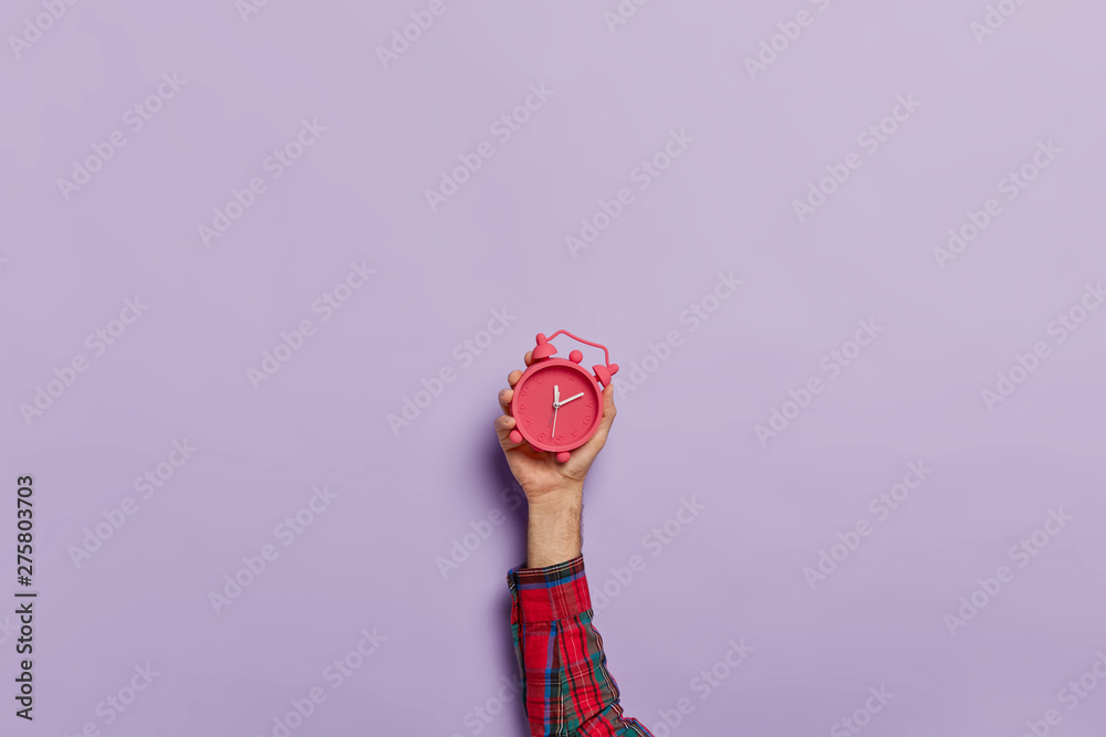 Fototapeta Time management, punctuality, awakening concept. Unrecognizable man holds little red alarm clock in hand, shows how much time left, isolated on purple wall. Timekeeper with mechanical watch.