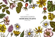 Floral Design With Colored Celandine, Chamomile, Dog Rose, Hop, Jerusalem Artichoke, Peppermint