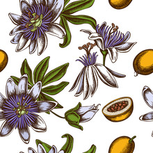 Seamless Pattern With Hand Drawn Colored Passion Flower