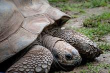 Closeup Of A Tortoise