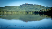 Loon On Lake In Front Of Mountain