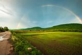 Fototapeta Tęcza - Rainbow Over the Rice Farm