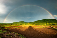 Rainbow Over The Rice Farm