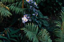 Daises In The Color Leaves In The Bushes