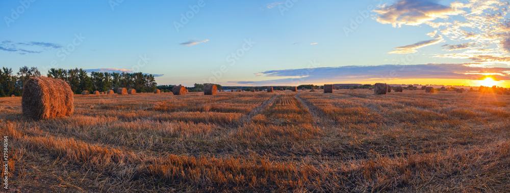 Fototapety, obrazy: Hay bales on the farm field