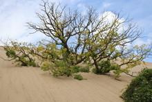 Indiana Dunes National Park-Indiana, USA