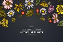 Floral Design On Dark Background With Celandine, Chamomile, Dog Rose, Hop, Jerusalem Artichoke, Peppermint