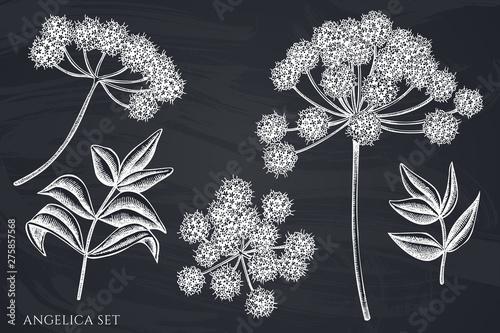 Canvastavla Vector set of hand drawn chalk angelica