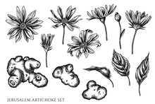 Vector Set Of Hand Drawn Black And White Jerusalem Artichoke