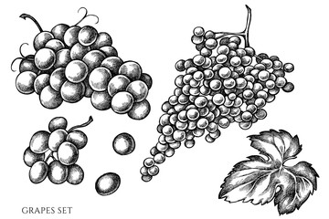 Vector set of hand drawn black and white grapes