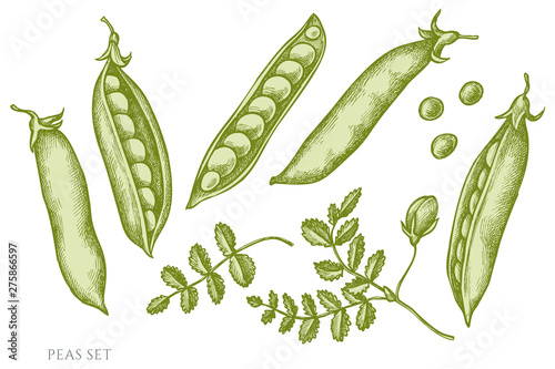 Photo Vector set of hand drawn pastel peas