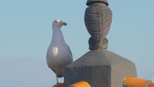 Seagull Takes A Rest And Scrat...