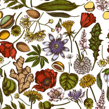 Seamless Pattern With Hand Drawn Colored Almond, Dandelion, Ginger, Poppy Flower, Passion Flower, Tilia Cordata