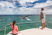 Whale Watching Boat Tour Touri...
