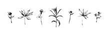 Hand Drawn Set Of Wild Herbs. ...
