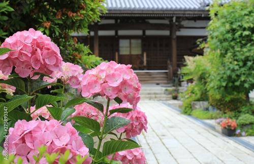 Photo お寺の境内に咲く紫陽花