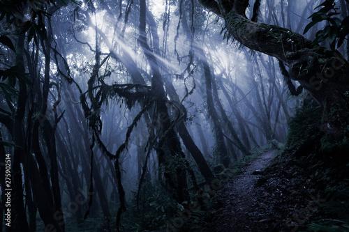 Foto Deep tropical jungle in darkness