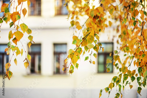 autumn cityscape, birch branch with yellow leaves hanging down, building with la Canvas-taulu