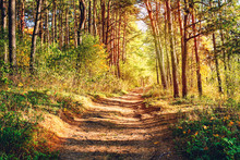 Earth Road Through Fabulous Autumn Forest, Wooden Tree Trunks Landscape, Scene Of Bright Nature In Autumn Time