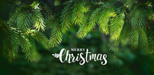Christmas Banner Greeting With Beautiful Fluffy Fir Branches And Inscription Merry Christmas. Border Of Fir Branches In Nature With Soft Focus And Sun Glare.