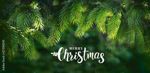 Cuadros en Lienzo Christmas banner greeting with beautiful fluffy fir branches and inscription merry Christmas