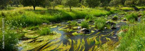 Aluminium Prints Rice fields Garciaz river, Garciaz, Las Villuercas, Caceres, Extremadura, Spain, Europe