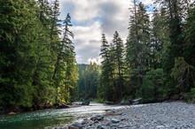 Impression Of The Cowlitz River In Washington State, Near The La Wiz Wiz Campground.