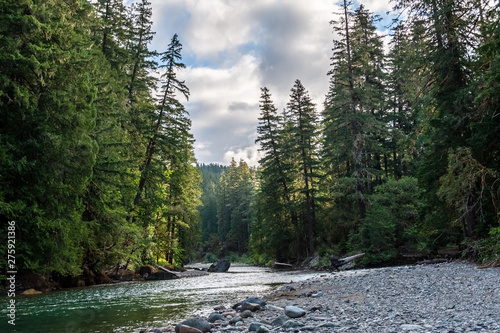 Printed kitchen splashbacks Forest river Impression of the Cowlitz River in Washington State, near the La Wiz Wiz campground.