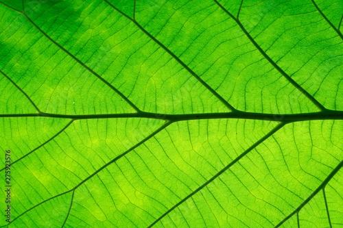 Macro shot. Green Leaf texture background  - 275923576