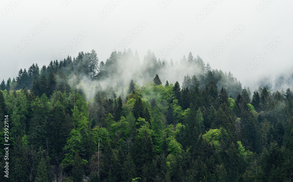 Misty landscape with pine forests in the morning