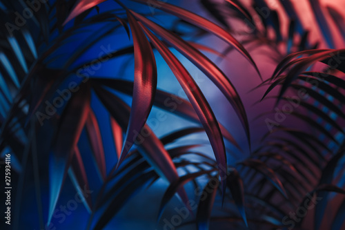 Obraz Tropical plants on blue and red neon background. empty space. 3D rendering. - fototapety do salonu