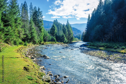 Poster Forest river mountain river winding through forest. beautiful nature scenery in autumn. spruce trees by the shore. wonderful piece of synevyr national park landscape in good weather with clouds