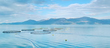 Salmon Farm In A Fjord Between...