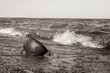 Black and White photo of military helmet on beach in the water.