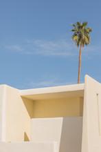 Adobe Structure Palm Tree