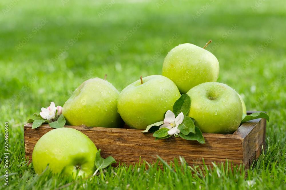 Fototapety, obrazy: Fresh garden green apples in box