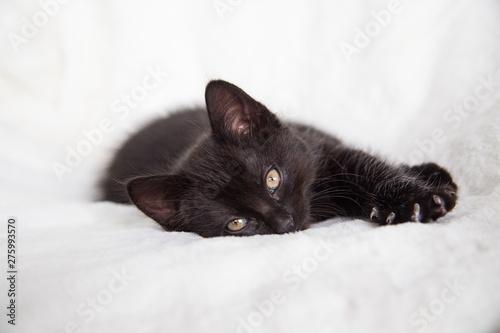 Chaton endormi Tableau sur Toile