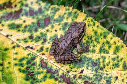 Photo mała młoda żaba wodna