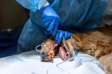 Veterinary Dentistry. Dentist ...