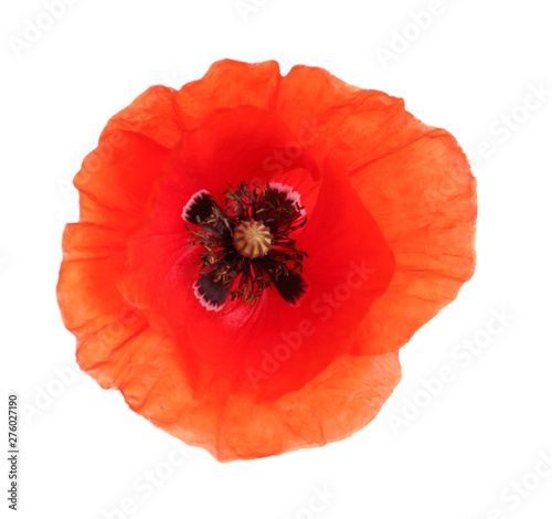 Obraz Fresh red poppy flower isolated on white, top view - fototapety do salonu
