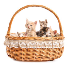 Cute Funny Kittens In Basket On White Background
