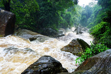 Water Flood On River After Heavy Rain Rapids Water Flow Copiously From Mountain Stream