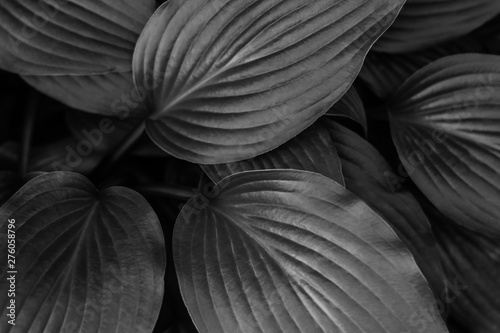Photo  black and white background of tropical leaves