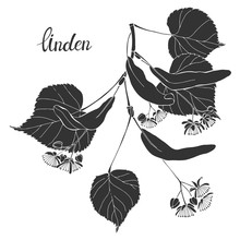 Linden Branch.Silhouette.Hand Drawn Vector Illustration, Isolated Floral Element For Design On White Background.