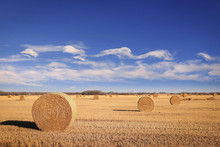 Round Bails Of Hay In A Farmer...
