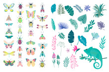 Set Of Plants And Insects - Beetles, Butterflies, Moths. Editable Vector Illustration