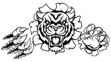 A Tiger Angry Animal Sports Ma...