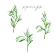 Watercolor set of sprigs. Hand drawn summer illustration. Perfect for print, wrapping paper
