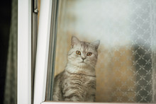 Beautiful Cat Looks Out The Wi...